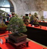 """Legnago, al Torrione la mostra """"TerraArmoniaMovimento"""" tra bonsai, ceramiche ed esibizioni di Tai Chi Chuan"""