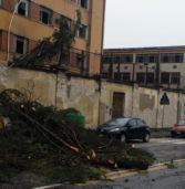 Verona, un albero tagliato all'ex tabacchi precipita in strada in viale della Fiera