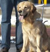 """Verona, musica e cena al """"LiveDog park"""" a sostegno del progetto di cani guida per ciechi"""