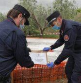 Illasi, sequestrata dai carabinieri forestali una base in calcestruzzo all'interno di un oliveto