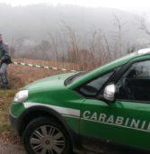Negrar, sequestrato dai Carabinieri un terreno predisposto a vigneto e creato estirpando un bosco
