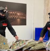 Verona, fermato dai carabinieri aveva in una scatola 5 chili di marijuana nascosta in 6 cuscini