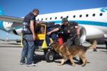 Verona, trafficante di droga italiano arrestato dalla Polizia dell'aeroporto con passaporto americano
