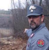 Tregnago, sequestrato dai carabinieri un vigneto ricavato abusivamente in un bosco