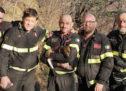 Ferrara del Monte Baldo, ritrovata dai vigili del fuoco la cagnolina scomparsa ieri in un dirupo