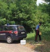 San Giovanni Ilarione, esce di strada con la sua auto: donna gravissima