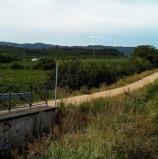 Monteforte d'Alpone, il Comune ha citato in giudizio la ditta che realizzò la pista ciclopedonale