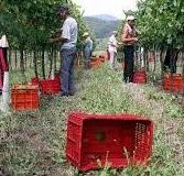 Emergenza Coronavirus, il sindacato Uila porta la campagna di disoccupazione agricola su WhatsApp, via mail e telefono