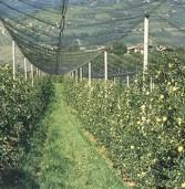 Zevio, il convegno che fa il punto sulla produzione di mele e pere