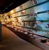 """Verona, domenica visita guidata ai musei con """"Turista nella mia città"""""""
