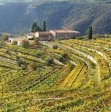 Valpolicella, approvata in Regione la mozione di Salemi (Pd) sulla candidatura a patrimonio dell'Unesco