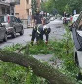 [FOTOSEQUENZA] Maltempo, Vigili del fuoco super impegnati in città, a Legnago sul Garda per alberi caduti