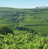 """Monteforte, domenica la """"Caminada tra le nostre vigne"""""""