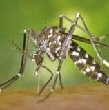 Legnago, primo contagiato dal West Nile: scatta il piano del Comune di disinfezione dalle zanzare